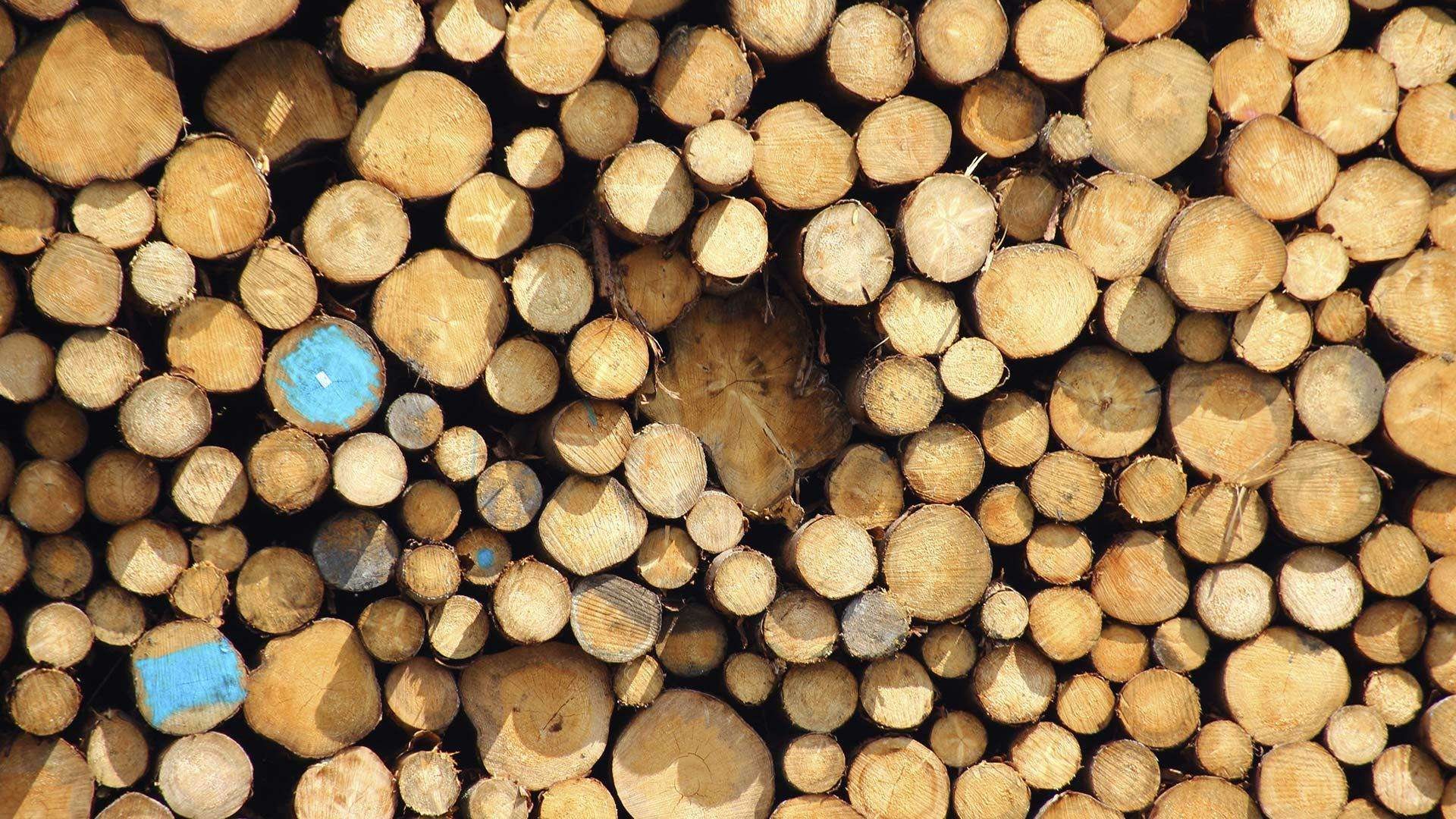 A photo of a pile of logs from tree felling